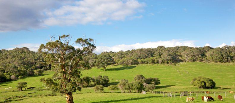green-paddocks-in-the-margaret-river