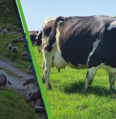 Beachport Liquid Minerals // Rumen Protection = Sustainability & Better Feed Conversion