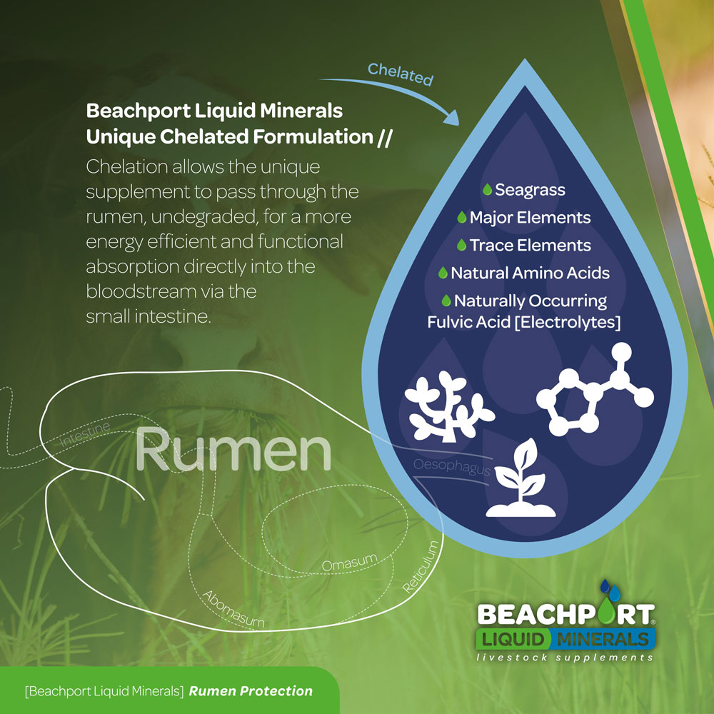Beachport Liquid Minerals Unique Chelation = Rumen Protection